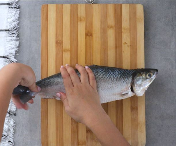 How to Debone Milkfish Instruction Bend Tail Part
