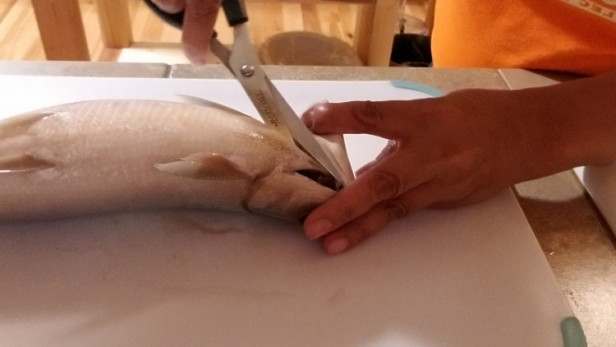 Remove gills of the Milkfish